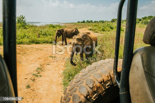 Nature photograph with view of two Asian elephants (Elephas maximus) near a safari car,Sri Lanka