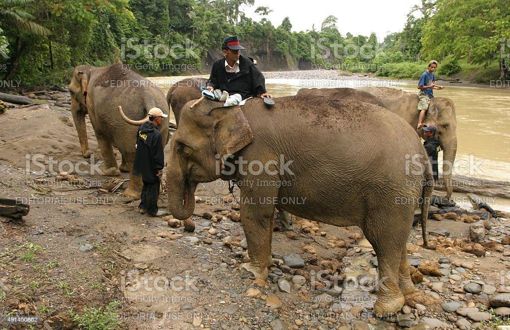 Asiatische Elefanten zu Fuß auf den Fluss für ein Bad – Foto