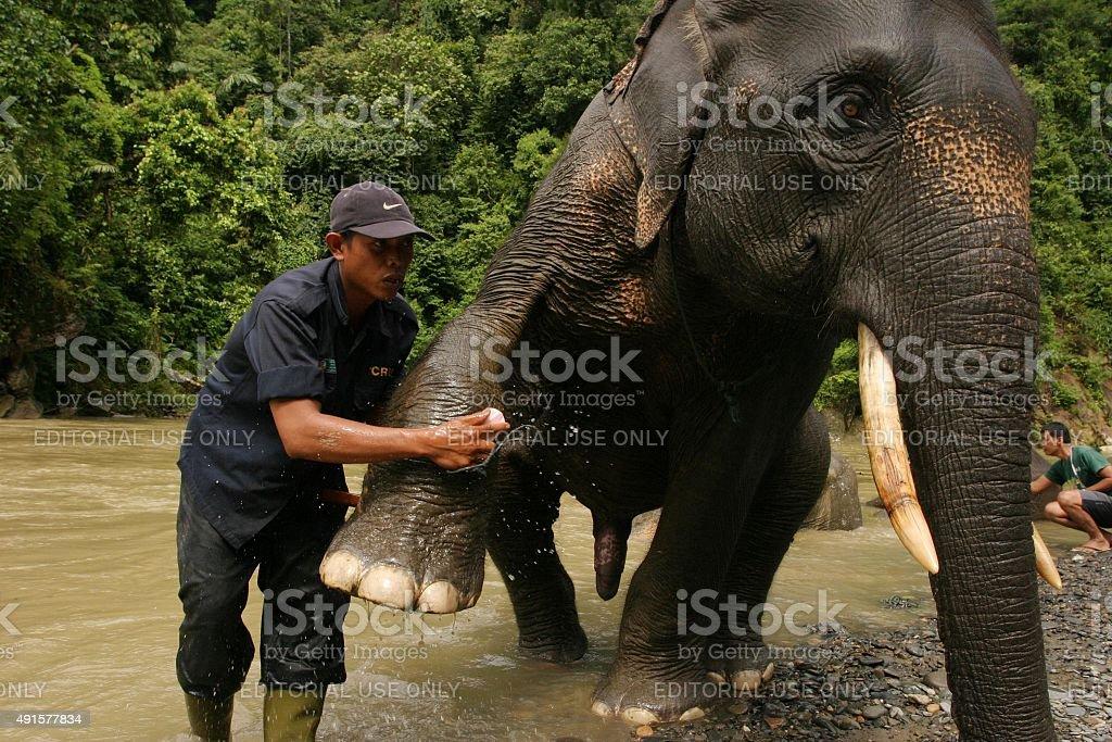 Asiatische Elefanten im Fluss Waschen und knüpfen Sie Kontakte – Foto