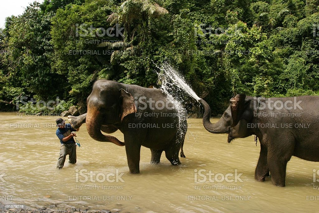 Asiatische Elefanten im Fluss Waschen anderen – Foto