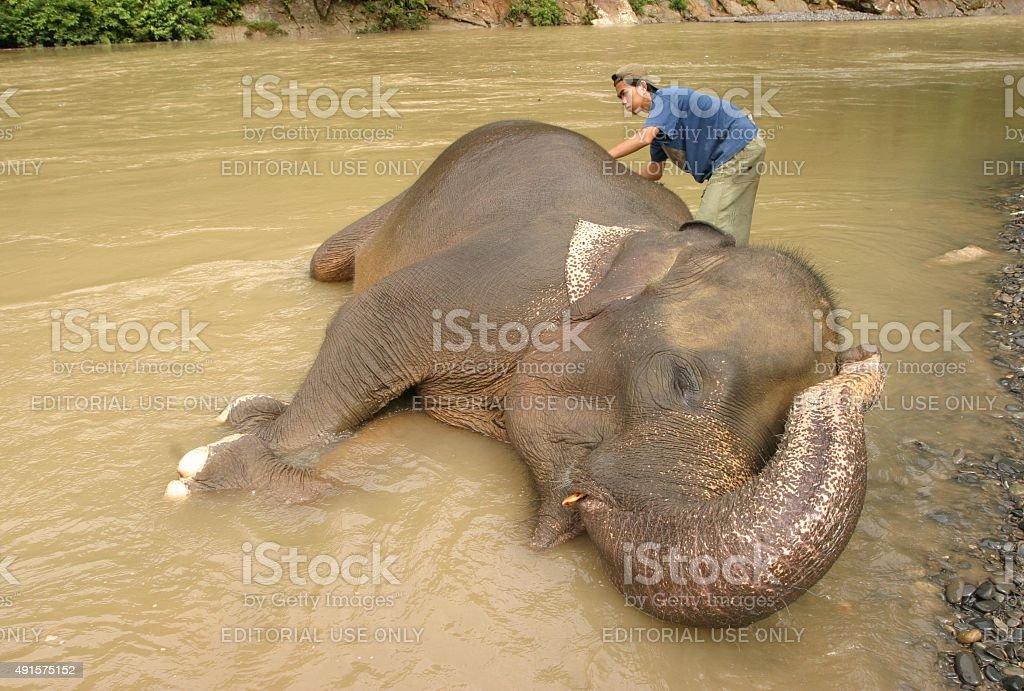 Asiatische Elefanten washed von Elefantenführer – Foto