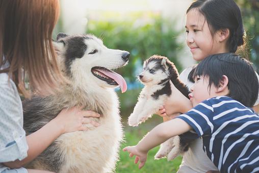 istock Asian family playing with siberian husky dog 925565188