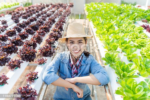 1096949092 istock photo Asian farmer at hydroponic vegetables salad farm. 1153771566