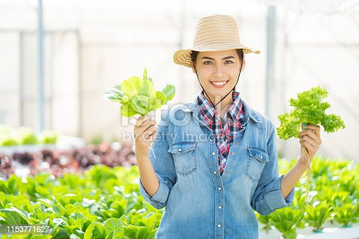 1096949092 istock photo Asian farmer at hydroponic vegetables salad farm. 1153771627