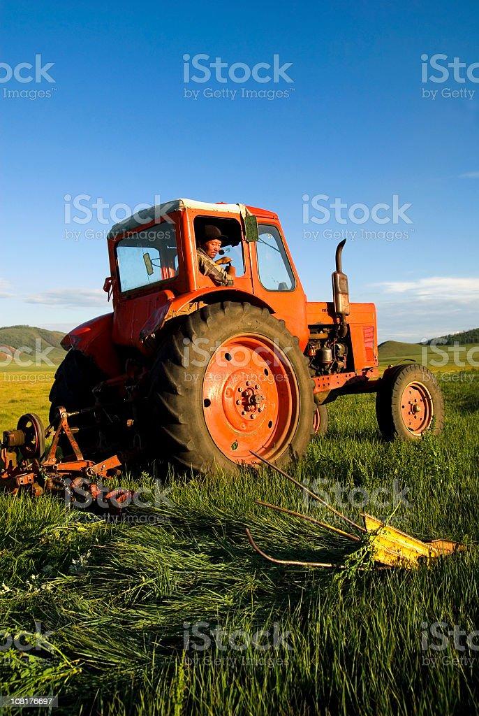Asian Farmer Cutting Grass in Field royalty-free stock photo
