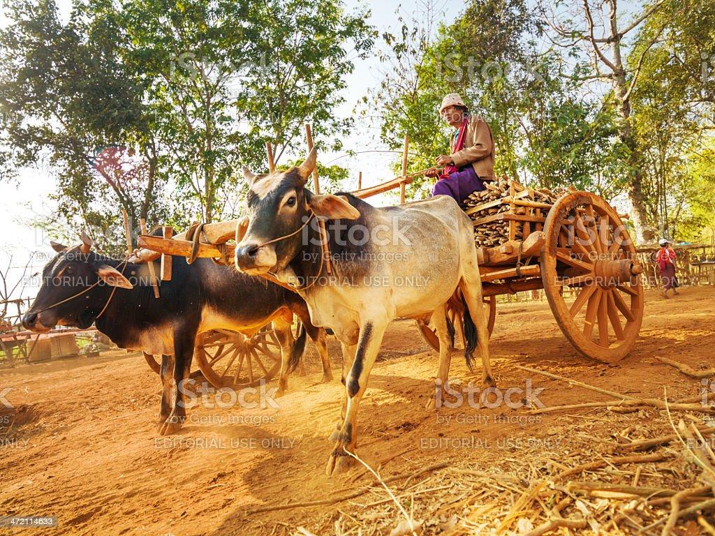asian farmer riding wooden cart, Myanmar stock photo