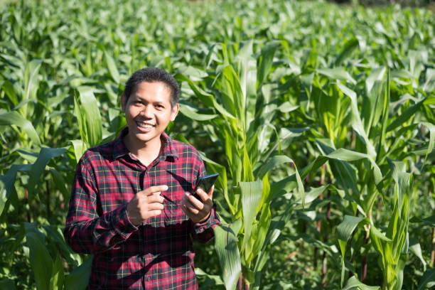 Asiatischer Landwirt mit Smartphone im Maisfeld – Foto