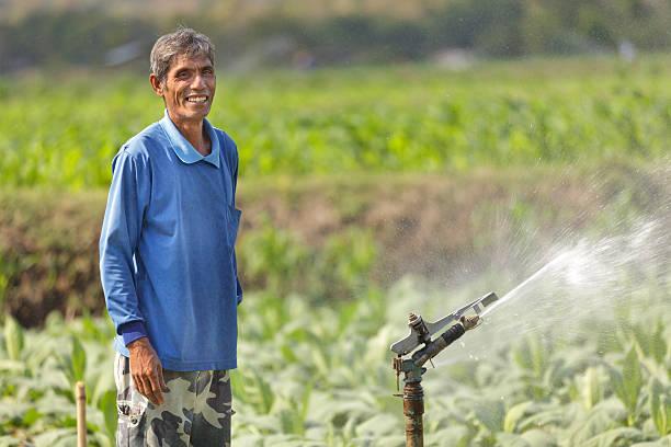 asian farmer watering plant stock photo