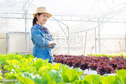 1096949092 istock photo Asian farmers at hydroponic vegetables salad farm. 1096949730