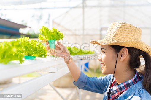 1096949092 istock photo Asian farmers holding  hydroponic vegetables salad farm. 1096949296
