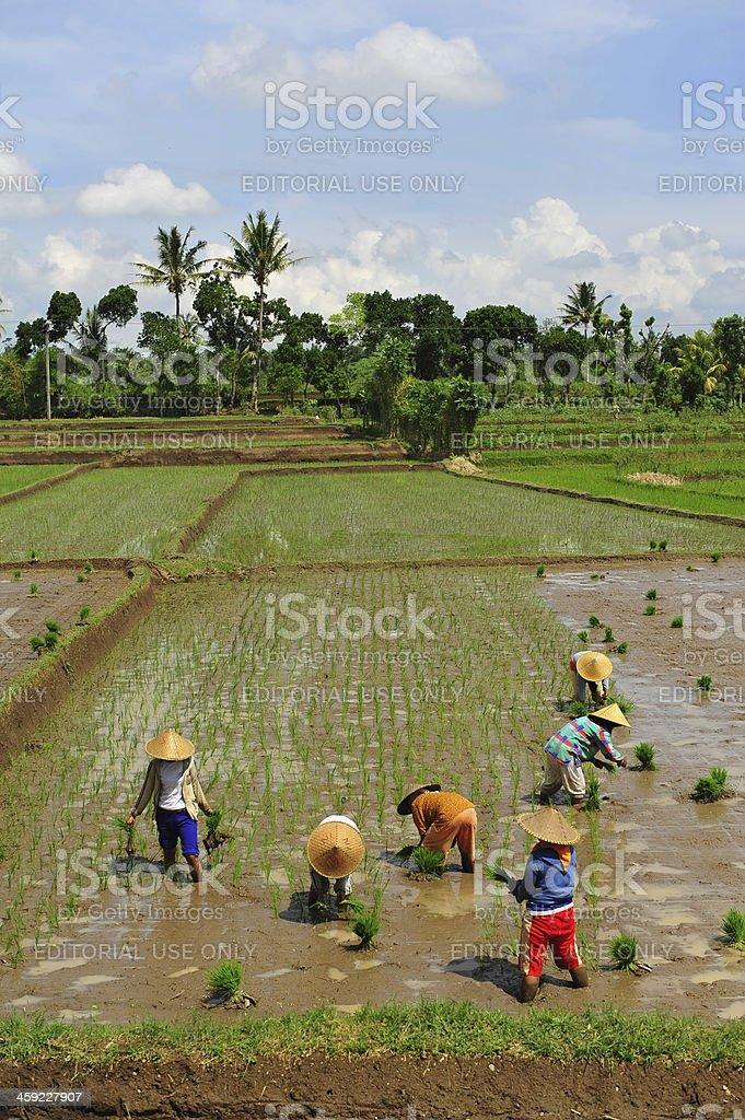 Asian farmers royalty-free stock photo