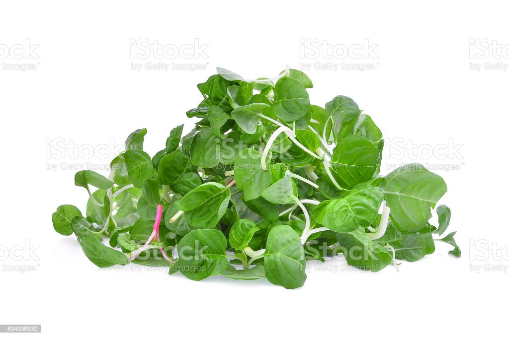 Asian fresh spinach green leaves isolated on white background stock photo