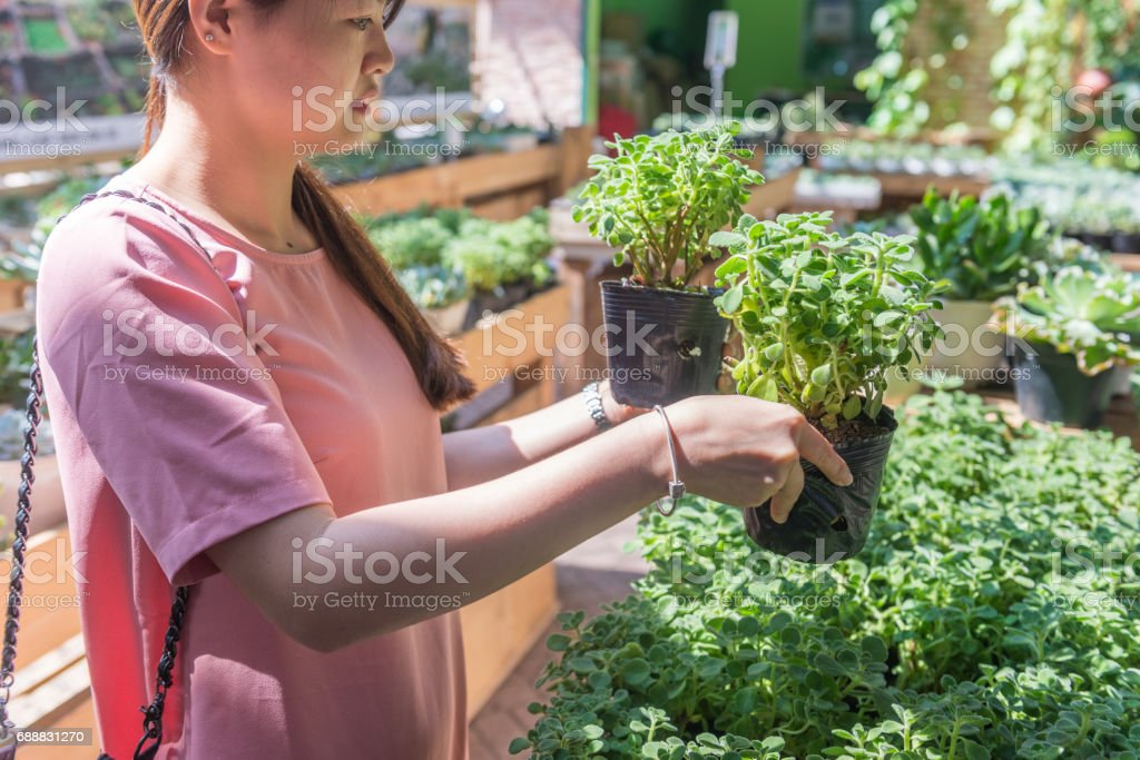 Asian girl chosing two plant pots in the garden stock photo