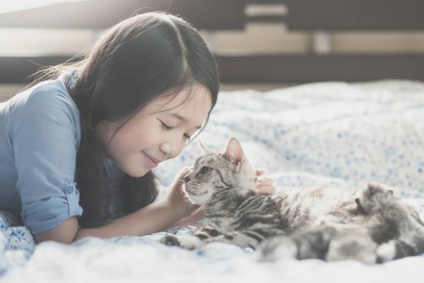 Asian girl playing with american short hair cat picture id656111650?b=1&k=6&m=656111650&s=612x612&w=0&h=tlvkd0cfr20zc7e magmjhxckh7fqb nr vcltxl4yc=