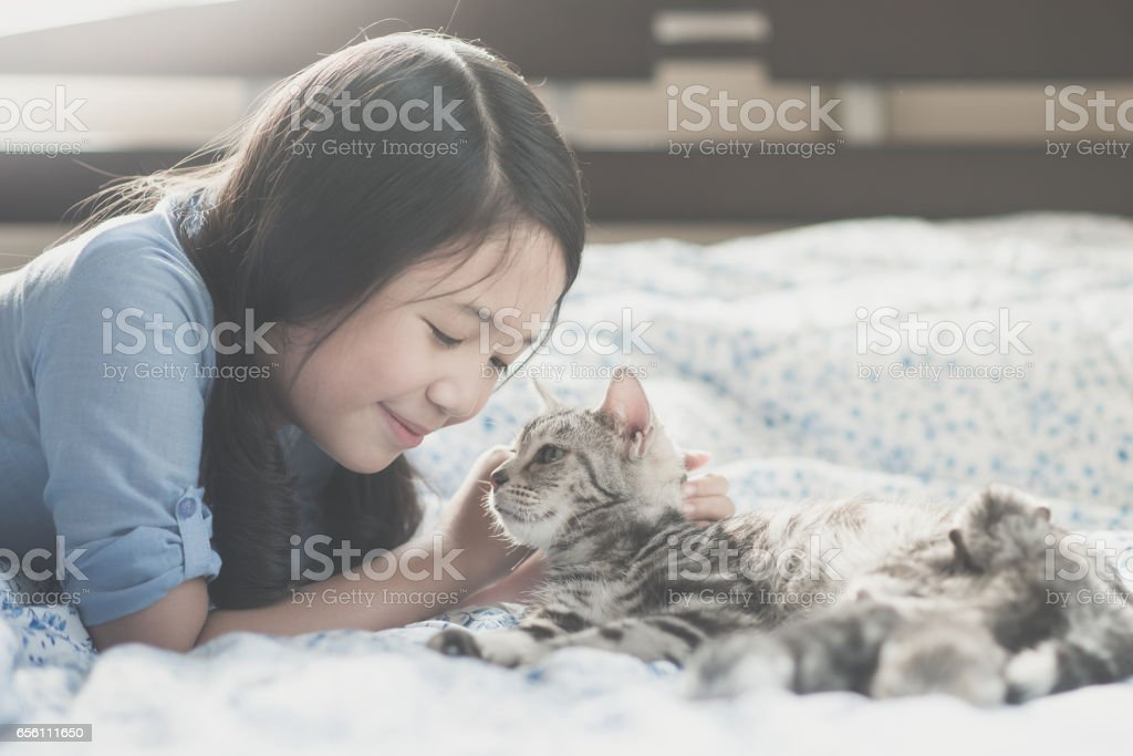 asian girl playing with american short hair cat stock photo