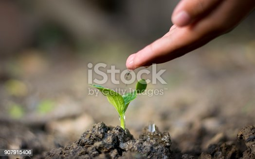 istock Asian hand watering a tree.Take care 907915406