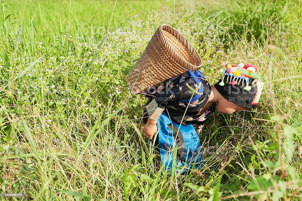 asian hmong girl on rice paddy stock photo