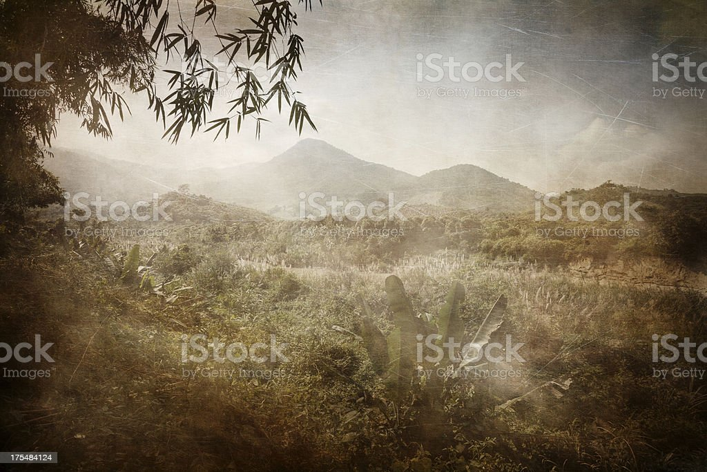 Asian jungle. Vietnam. Sepia toned, vintage stylized image stock photo