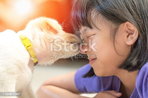 Asian kid girl playing with puppy in house. Small dog pet licking face of owner child