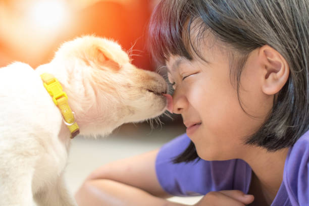 Asian kid girl playing with puppy in house small dog pet licking face picture id1154872907?b=1&k=6&m=1154872907&s=612x612&w=0&h=f8xgyreb8o3awvggm cvomm44hdvms5lhdrhlgvjgeu=
