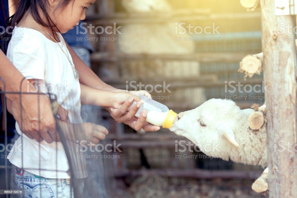 Asiatique petite fille et père sont nourrissent de lait pour agneau - Photo