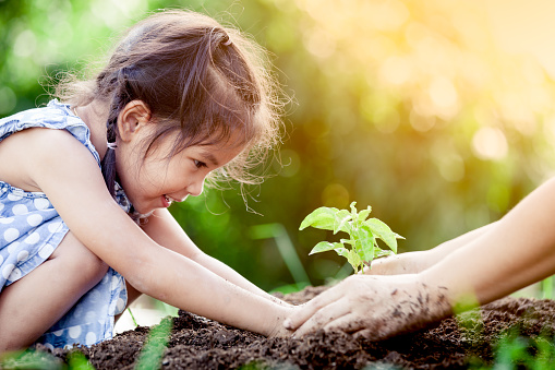Asian little girl and parent planting young tree on black soil together