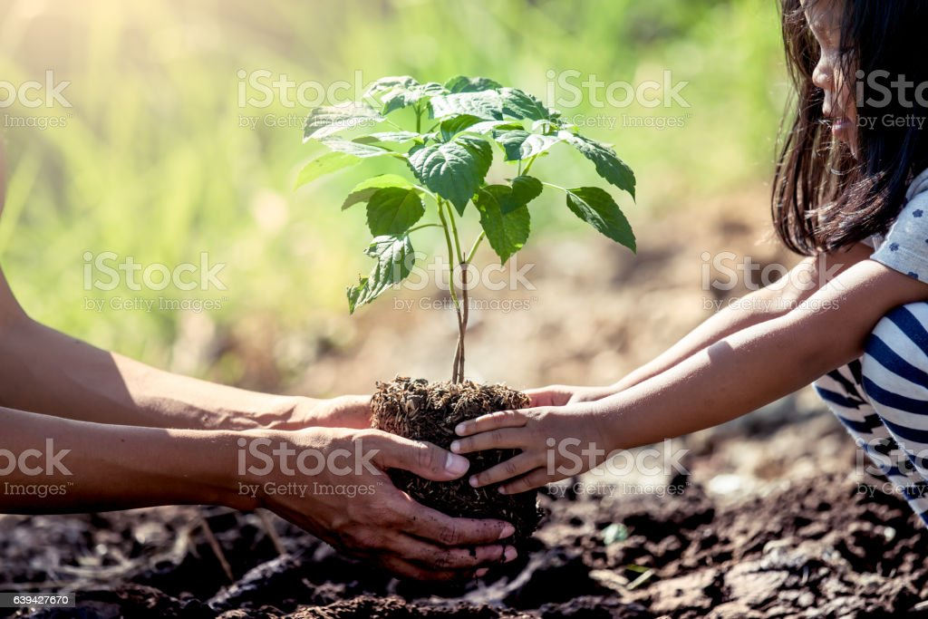Asian little girl helping his father to plant the tree stock photo