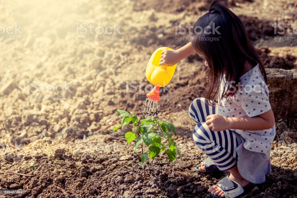 Asian little girl watering young tree with watering pot stock photo
