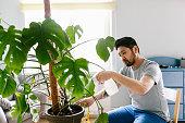 自家製モンステラ植物のためのアジア人の世話