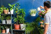 自宅でアジア人の水やり工場、仕事の後に白い吊りポットでクロロフィタムコモサム(クモの植物)の世話をするビジネスマン、週末に