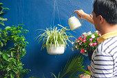 自宅でアジア人の水やり工場、白い吊りポットでクロロフィタムコモサム(クモの植物)の世話をするビジネスマン
