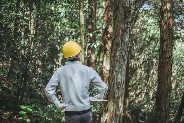 asian man working with forestry - industria forestale foto e immagini stock