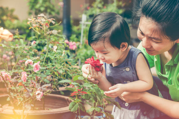 Asian mother and daughter admiring for rose flowers with sunlight. Vintage tone. stock photo