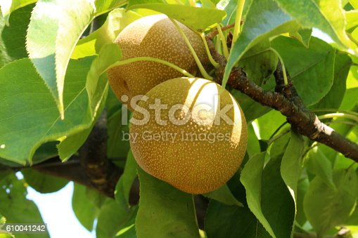 Detail of a delicious asian pear in white background