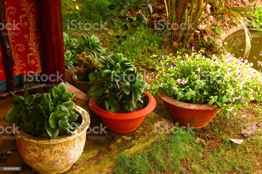 Asiatische Pflanzen asiatische pflanzen als teil der landschaftsgestaltung stock