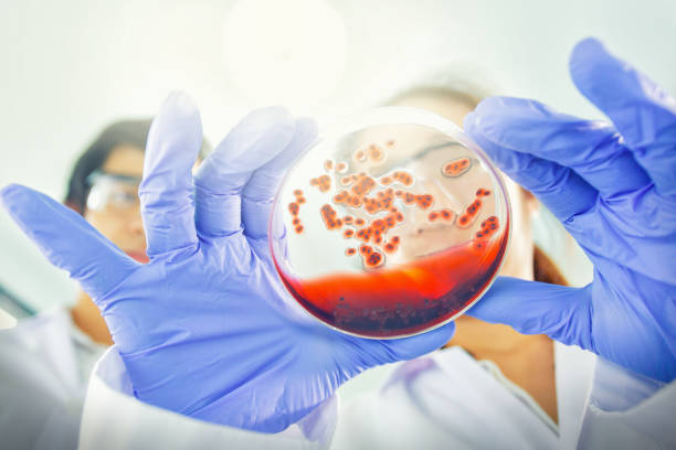 asian scientists working in example disease laboratory - microbiology stock pictures, royalty-free photos & images