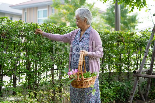 Asian senior or elderly old lady woman taking care of the garden in house, hobby to relax and exercising with happy.