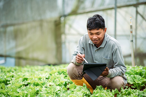 Smiling worker kneeling and using digital tablet while examining plants in greenhouse