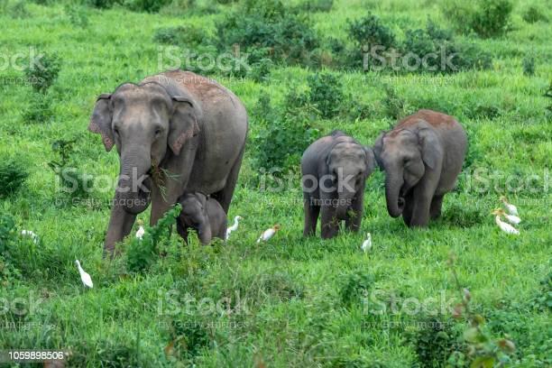 Asian wild elephant kuiburi national park thailand picture id1059898506?b=1&k=6&m=1059898506&s=612x612&h=v4htvjyxsnfddfrxokua6fhpjbc0pk4ad xetheslb8=
