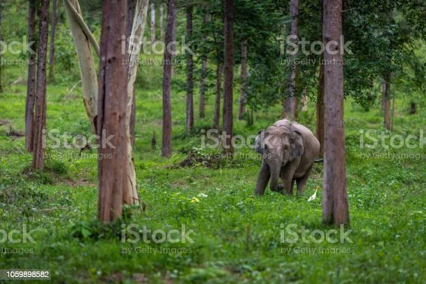 Asian wild elephant kuiburi national park thailand picture id1059898582?b=1&k=6&m=1059898582&s=612x612&h=6ssbp4zvxe8o ligdk7fki4wsku5u3l5srrheembf08=