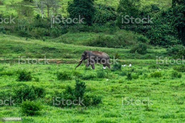 Asian wild elephant kuiburi national park thailand picture id1059898594?b=1&k=6&m=1059898594&s=612x612&h=f8dzvddihgnyssdclgemfj6fggi8utj diibcohaz1i=