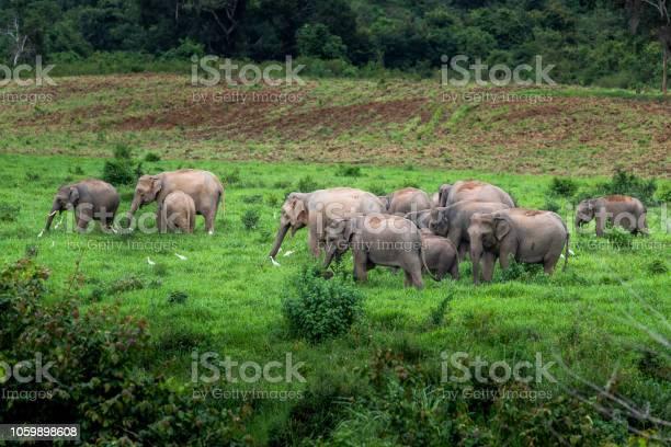Asian wild elephant kuiburi national park thailand picture id1059898608?b=1&k=6&m=1059898608&s=612x612&h=da 5f9uca8 plqdhe0nni1lsg8fp1yhlhkzqxy6co1c=