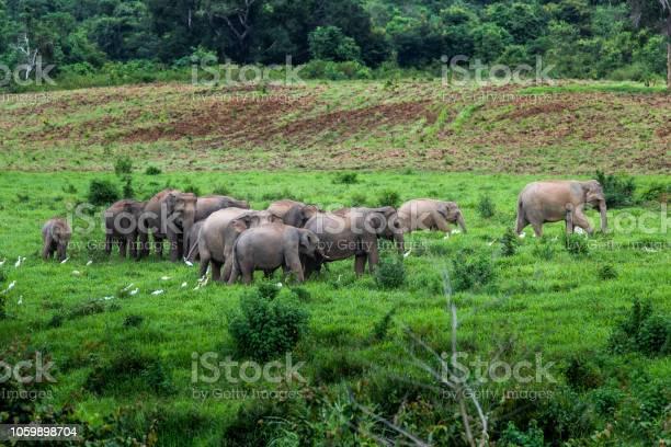 Asian wild elephant kuiburi national park thailand picture id1059898704?b=1&k=6&m=1059898704&s=612x612&h=8yw yghdr2drwv l2gjsctu6mddjmjdlfewypocqgfc=