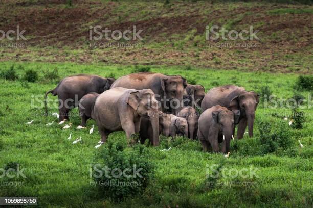 Asian wild elephant kuiburi national park thailand picture id1059898750?b=1&k=6&m=1059898750&s=612x612&h=gudqcuw0cc 0jt9jbezbjpxkayct4d3kjka2wktcxty=