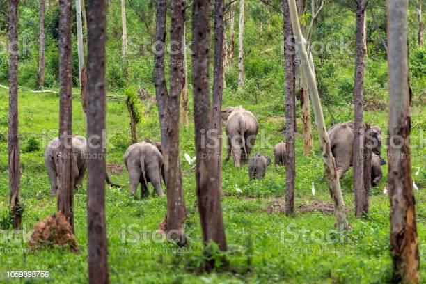 Asian wild elephant kuiburi national park thailand picture id1059898756?b=1&k=6&m=1059898756&s=612x612&h=fdrpfz1khu1w97ecxyqvemc5vb9i8ufoh 89tlhonz4=