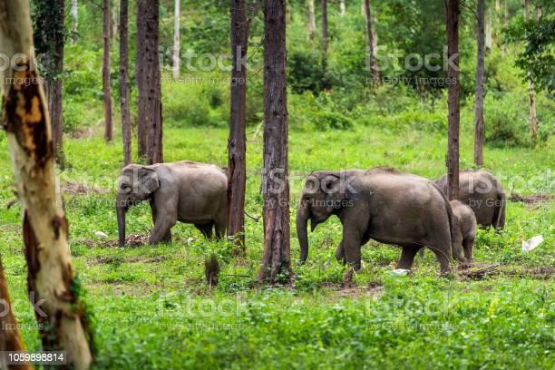 Asian wild elephant kuiburi national park thailand picture id1059898814?b=1&k=6&m=1059898814&s=612x612&h=8y3ggowgmntc7j8lrqzf  89x9e0hzotcvczyjymedo=