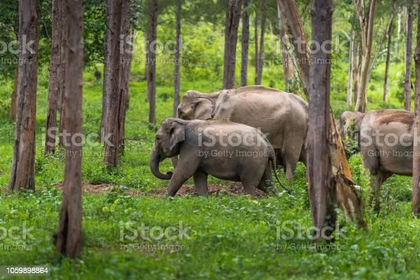 Asian wild elephant kuiburi national park thailand picture id1059898864?b=1&k=6&m=1059898864&s=612x612&h=rrleesdwsta qzhr8zwpbr1xjcoq  evhp3pv3fivuw=