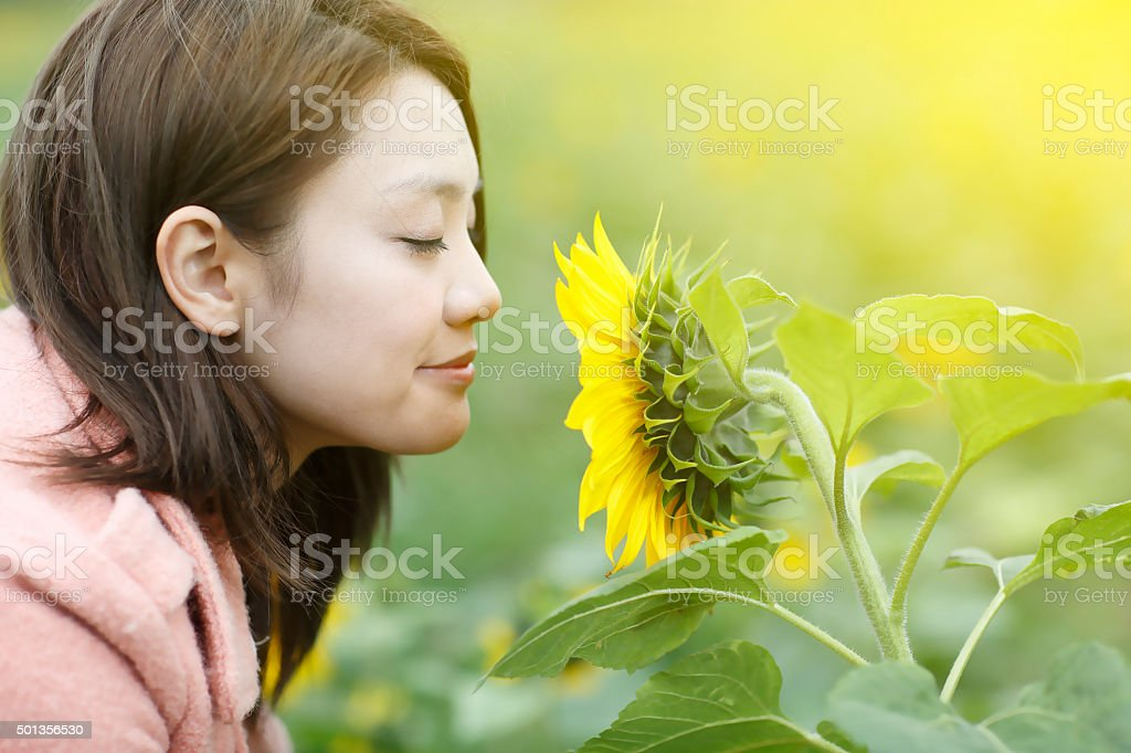 Asian woman Smelling Sunflowers stock photo