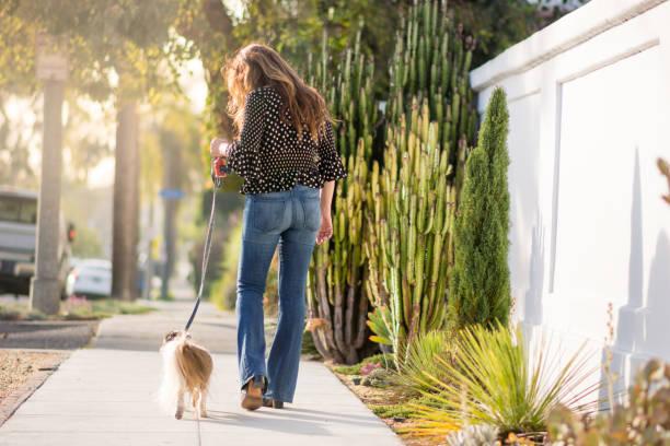 Asian woman takes her senior shih tzu dog for a walk picture id915530746?b=1&k=6&m=915530746&s=612x612&w=0&h=t8oflbzniazcliouzqbz f6tmakpwt9oddsp qqutzi=