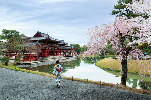 Asian women wearing traditional japanese kimono in Byodo-in Temple in Uji, Kyoto, Japan during spring. Cherry blossom in Kyoto, Japan.